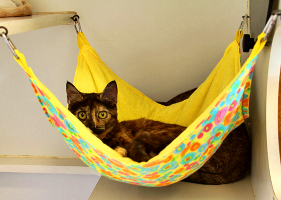 Kitty-Hammock-Egg-Chair.png
